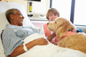 Elder Care Memorial TX: FAQs About Seniors Adopting a Dog or Cat